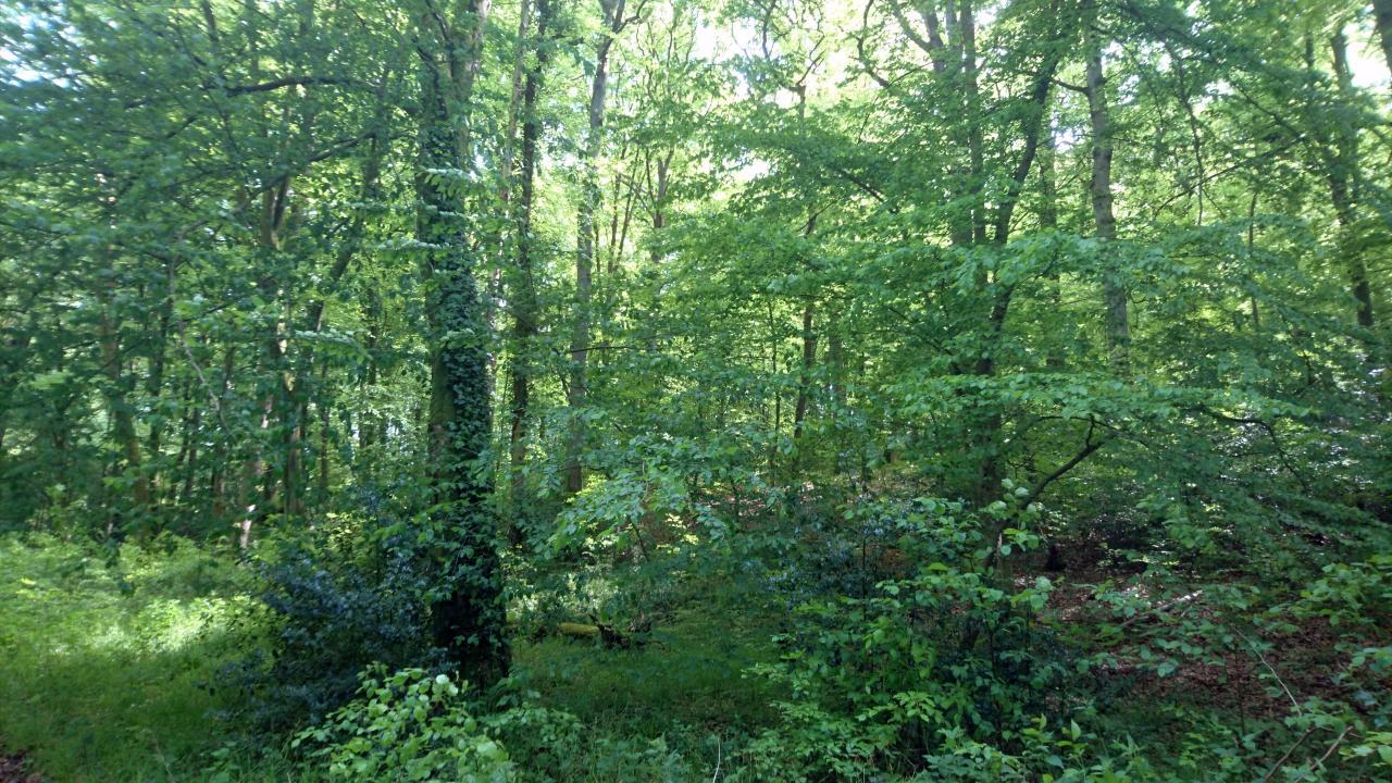 Que la forêt est belle au printemps